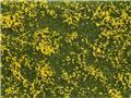 Flocage couvre-sol prairie en fleurs jaune 12 x 18 cm