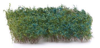 Haies floraison bleue