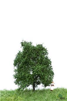 Chêne en été en N