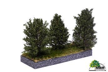 Grand buisson vert foncé 10-12 cm